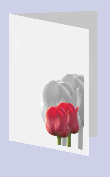 Rouwkaart Tulp Schaduw Rouwcirculaire