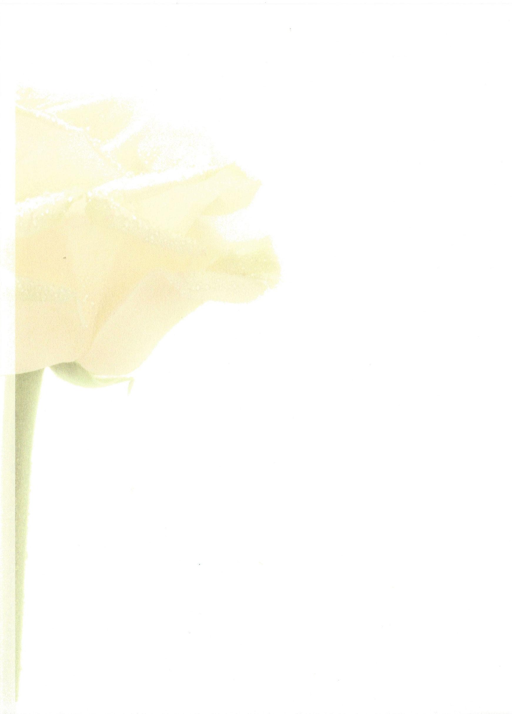 Grote Witte Roos Rouwkaart Rouwcirculaire Dankbetuiging